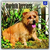 Norfolk Terriers 2017 Square (Multilingual Edition)
