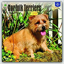 Norfolk Terriers 2017 Square Wall Calendar