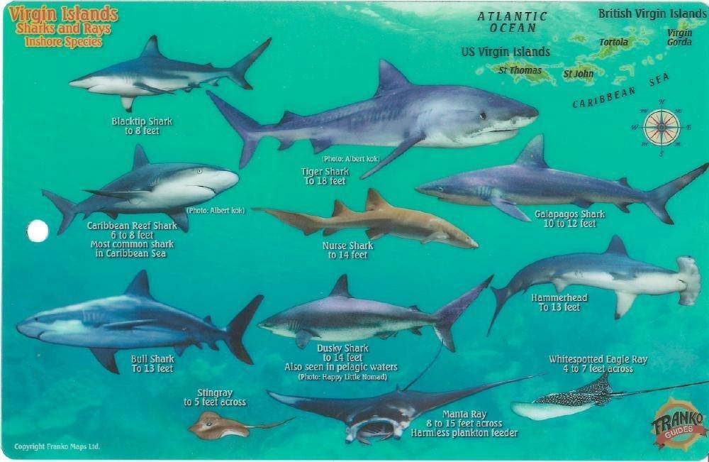 Virgin Islands Sharks /& Rays Laminated Fish Card by Franko Maps