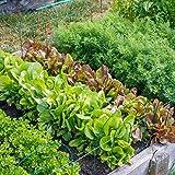 Pack Vegetable Seeds Garden Vegetable Seeds Mixed