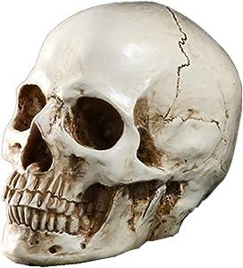 Moredental Skull Head Statue for Halloween Decoration 1:1 Resin Human Skull Model Home Decorations Skull Head Collectible Skeleton Figurine 7.9x5.9x4.5
