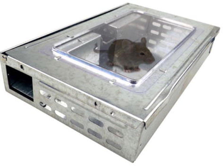 Humane mouse trap: Amazon.co.uk: Kitchen & Home