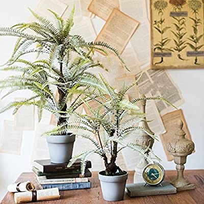 Gentille G Home Collection Rustic Artificial Boston Fern Bonsai (Small): Home & Kitchen