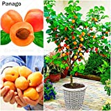 Go Garden 2Pcs/Bag Bonsai Apricot Plant Perennial Tree Delicious Fruit Plant Rare Bonsai Home Garden Plant Chinese Armeniaca Vulgaris