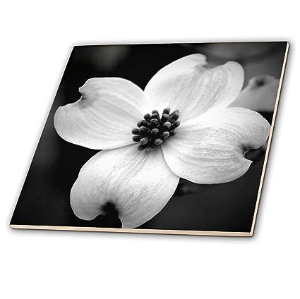 Amazon 3drose Whiteoak Black And White Photography Black And