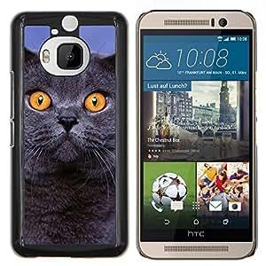 YiPhone /// Prima de resorte delgada de la cubierta del caso de Shell Armor - Siberiano azul British Shorthair gato - HTC One M9Plus M9+ M9 Plus