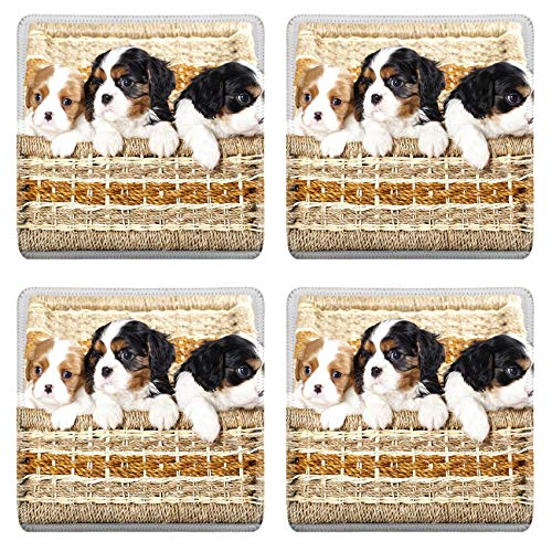 MSD Drink Coasters 4 Piece Set Image ID: 11452278 Cavalier King Charles spaniel puppies