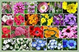 Partial Shade Wildflowers - 1 Oz. with 28 Varieties of Annual and Perennial Flowering Plants. Non GMO - Neonicotinoid-Free.
