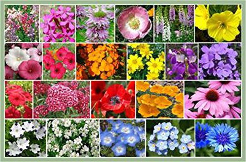 partial shade wildflowers 1 oz with 28 varieties of annual and perennial flowering plants non gmo