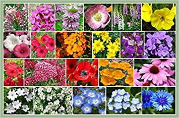 Amazon partial shade wildflowers 1 oz with 28 varieties of partial shade wildflowers 1 oz with 28 varieties of annual and perennial flowering plants mightylinksfo Images
