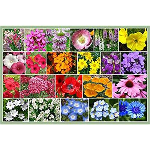 Perennials zone 5 amazon partial shade wildflowers 1 oz with 28 varieties of annual and perennial flowering plants non gmo neonicotinoid free mightylinksfo