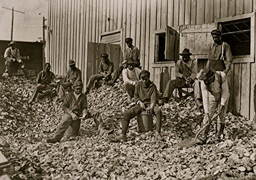 Oyster shuckers at Apalachicola Fla This work is carried on by many young boys during busy seasons This is a dull year so only a few youngsters were in evidence Poster Print (18 x 24) (Best Oysters In Apalachicola)