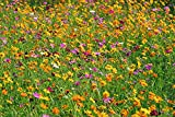Crazy Cosmos Wildflower Seeds Mixture (All Colors) - Bulk 1 Ounce Packet - Over 5,000 Seeds - Pink, Yellow, Orange, Red, Purple and White Mixed Species!