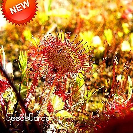 KHTO Auto Tropfbew/ässerung Spike Gartenpflanzen Blumen-Bew/ässerungs-System-Kits den Haushalt Waterers 12 pcs Blue