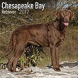 Chesapeake Bay Retriever Calendar 2017 - Dog Breed Calendars - 2016 - 2017 wall calendars - 16 Month by Avonside