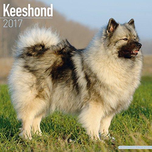 Original 2016 Costumes (Keeshond Calendar 2017 - Dog Breed Calendar - Wall Calendar 2016-2017)