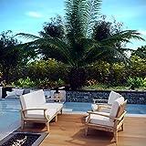 Modway EEI-1818-NAT-WHI-SET Marina Premium Grade A Teak Wood 4-Piece Outdoor Patio Furniture Set, Seats Four, Natural White