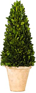 Preserved Boxwood Cone Topiary Original Natural Boxwood Christmas Decor Plant(Cone Tree Topiary, 17 inch high)