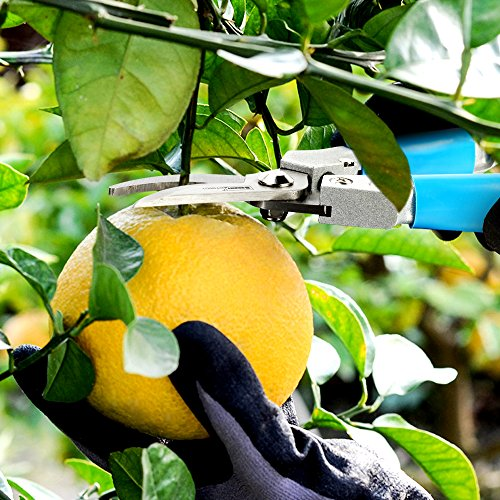 Pruning-Shears-Folding-Saw-HANMEIUS-2-Inch-1-Flower-Pruner-Shears-Hand-Pruners-Branch-Professional-Tree-Saw-for-Flower-Tree-Pruning-Camping-Hunting-Toolbox