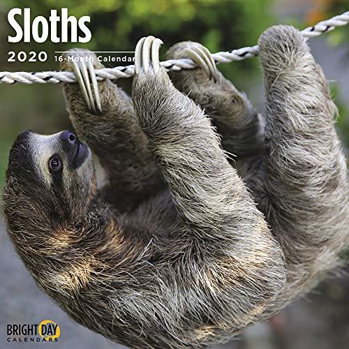 2020 Sloths Wall Calendar