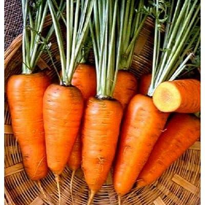 10, 000 Chantenay Red Core Carrot Seeds #GSB13 : Garden & Outdoor