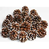Bag of Snow Tipped Natural Pine Cones for Decorating and Designing-1/2lb.