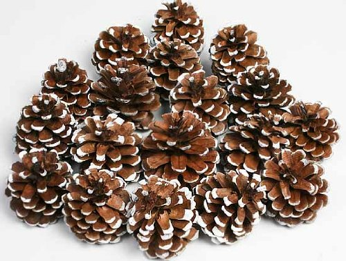 Bag of Snow Tipped Natural Pine Cones