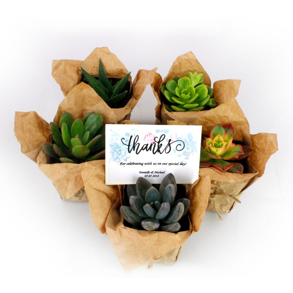 NW Wholesaler - Bulk Succulents with Craft Paper, Burlap String, and Personal Cards for Wedding or Party Favors (50) by NW Wholesaler (Image #4)