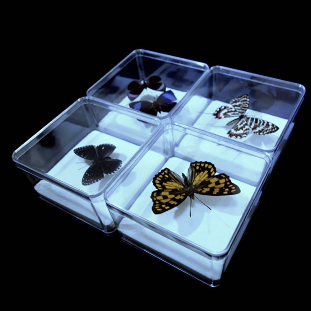 YXFYXF 4 Pcs Transparent Plastic Specimen Box Butterfly Insect Specimens Collection DIY Display Box 9.5 /× 9.5 /× 5.8 cm