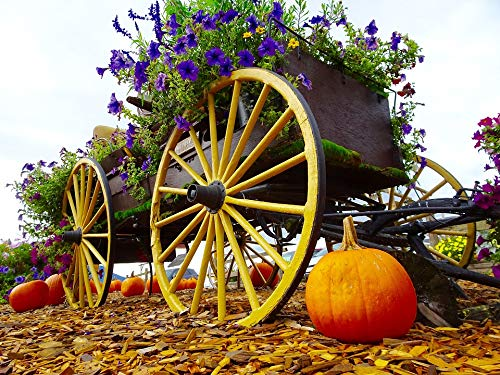 (Home Comforts Laminated Poster Decoration Wheel Pumpkin Wagon Flowers Vivid Imagery Poster Print 24 x 36)