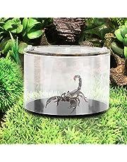 Pssopp Pudełko do hodowli gad ekologiczny krajobraz butelka okrągłe pnąca zwierzę domowe pudełko do karmienia pająków jaszczurki żółw
