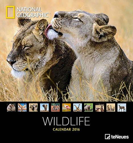 Wildlife 2016 - National Geographics Wildtiere 2016 - 45 x 48 cm