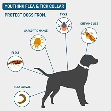 2 PCS Pack of 2 YOUTHINK Flea /& Tick collar for Dog Cat 8 Months Effective Protection Adjustable Length 62cm for Small Medium Large Pets