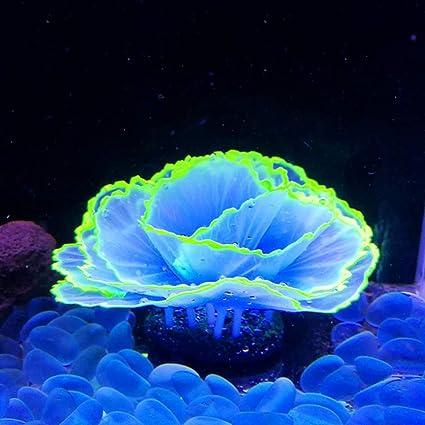 "Amazon.com : Danmu 1pc of Glowing Effect Artificial Coral, Aquarium Coral  Decor, Coral Ornaments, Plant Ornaments for Fish Tank Aquarium Decoration  Flower Shape 2 7/10"" x 3 9/10"" (Blue) : Pet Supplies"