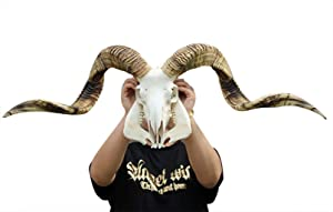 Authentic Ram Skull with Horns Natural Sheep Ram Skull Wall Hanging and Longhorn Steer Handmade Carved Ram Head Skull Large Curled Horns - Home Decor, Collectible (Gold) (Gold)