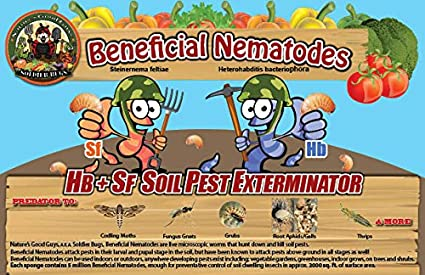Bug Sales 10 Million Live Beneficial Nematodes Hb & Sf - Kills Over 200 Different Species of Soil Dwelling and Wood Boring Insects.