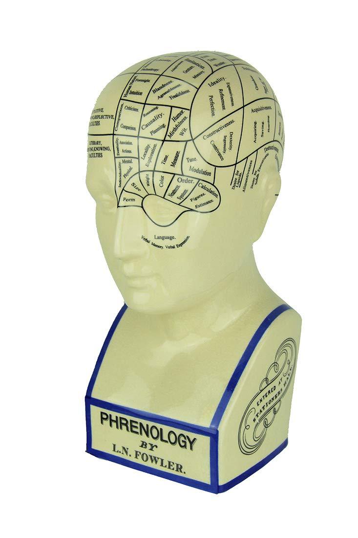 L.N. Fowler Phrenology Head Statue by Magoo's General Store