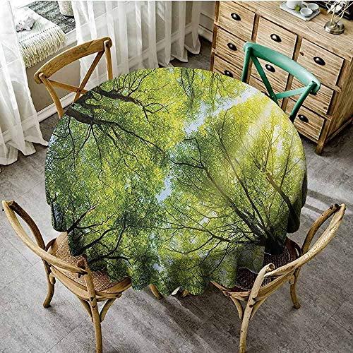 Beach Round Tablecloth Farm House Decor Collection,The Warm Spring Sun Shining Through The Canopy of Tall Beech Trees Romantic Scene,Green Yellow Circular Table Cover Diameter - Inch Desk Beech 36