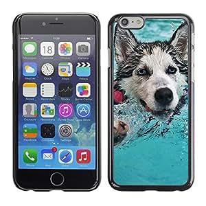 LECELL--Funda protectora / Cubierta / Piel For Apple Iphone 6 Plus 5.5 -- Feliz Husky --