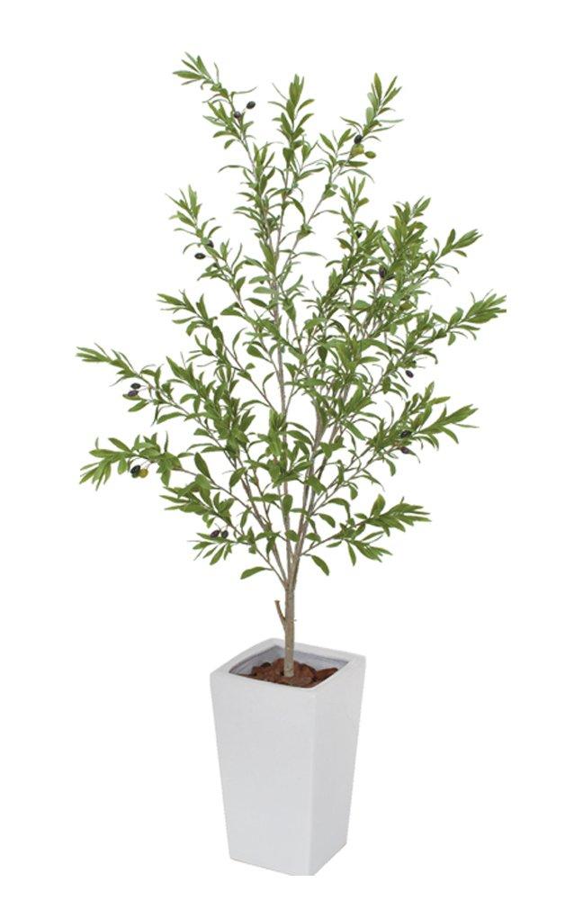 フェイクグリーン オリーブの木 鉢植M(オリーヴ ツリー) 150cm 白鉢 (sf-1008sc) ギフトラッピング、お祝札対応可 B071L3NJQ8