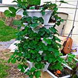 Mr. Stacky 5 Tiered Vertical Gardening