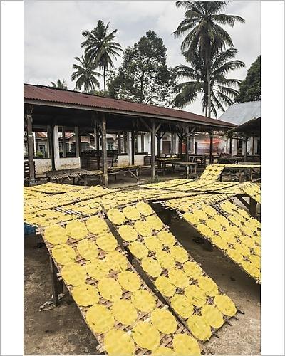 Robert Harding 10x8 Print of Krupuk (Kroepoek) drying in the sun, Bukittinggi, West Sumatra, Indonesia (12169346) by Robert Harding