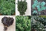 David's Garden Seeds Collection Set Kale RSL7711 (Multi) 6 Varieties 2000 Seeds (Open Pollinated, Heirloom, Organic)