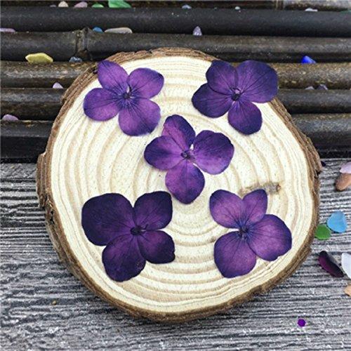 Hydrangea Violet - 1