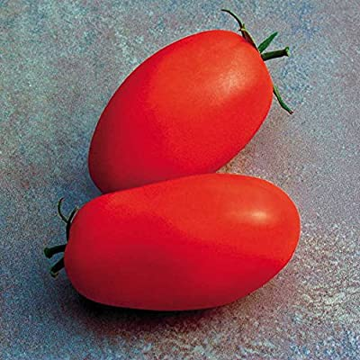 Park Seed Supremo Hybrid Tomato Seeds : Garden & Outdoor