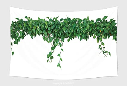 Amazon home decor tapestry wall hanging heart shaped leaves home decor tapestry wall hanging heart shaped leaves vine devil s ivy golden pothos isolated on mightylinksfo