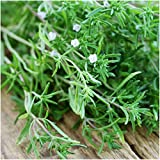 Package of 500 Seeds, Summer Savory Herb (Satureja hortensis) Non-GMO Seeds By Seed Needs