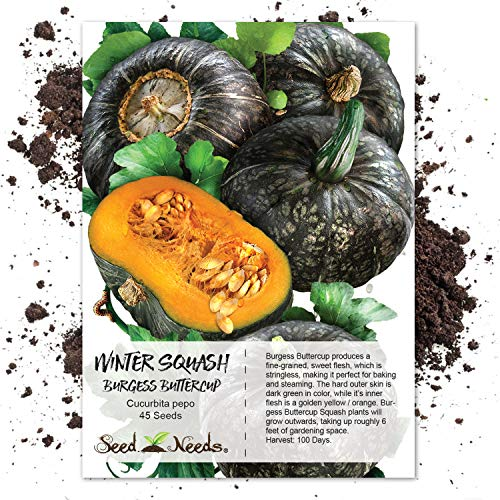 - Seed Needs, Burgess Buttercup Winter Squash (Cucurbita Pepo) 45 Seeds Non-GMO