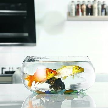 Jiangu - pecera de cristal circular transparente y creativa, mini acuario de oficina, recipiente hidropónico de jarrón mediano: Amazon.es: Productos para ...