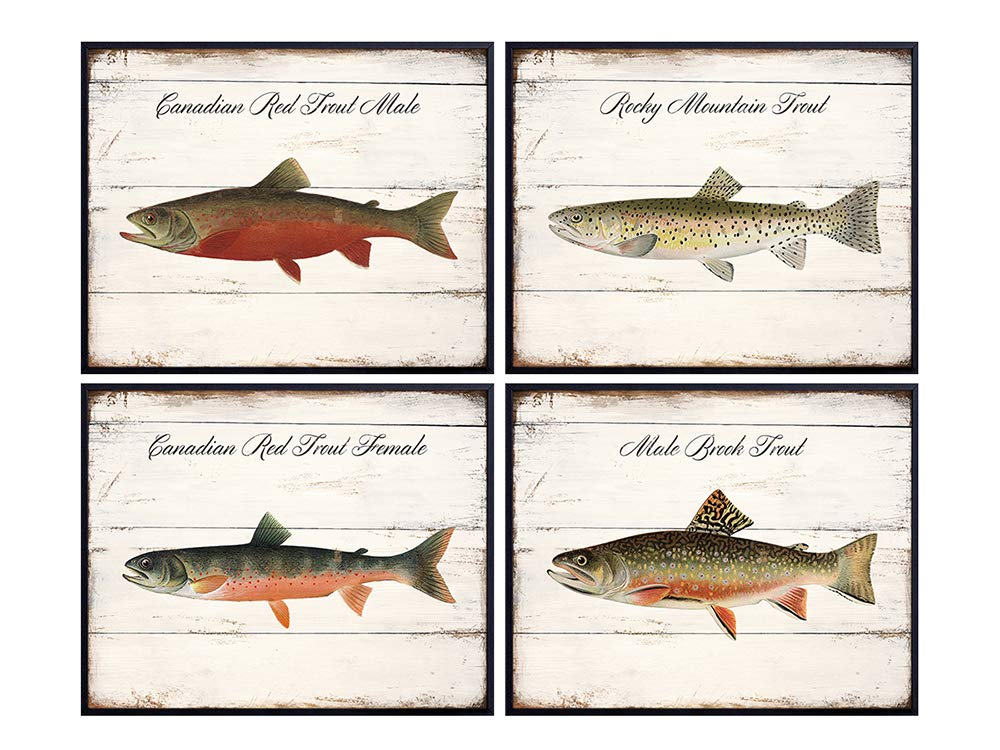 Vintage Denton Trout Illustration Wall Art - 8x10 Wood Sign Replica Photo Print Set for Lake or Beach House, Home Decor, Room Decoration - Rustic Shabby Chic Gift for Fisherman, Fly Fishing Fan